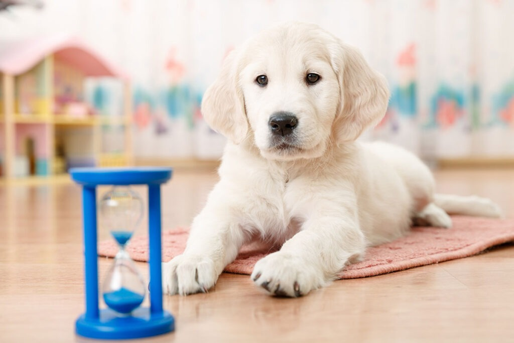 Mistakes to Avoid When House Training Your Dog