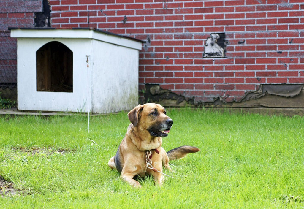 How to Avoid Problems When Keeping Your Dog Outside