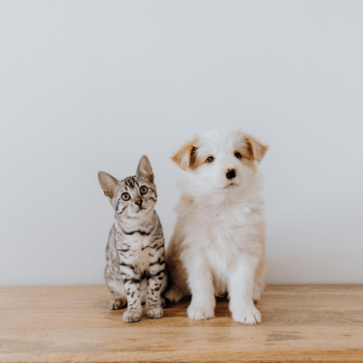 A cat and dog sit next to each other.