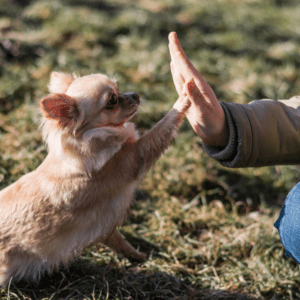 small dog giving high five