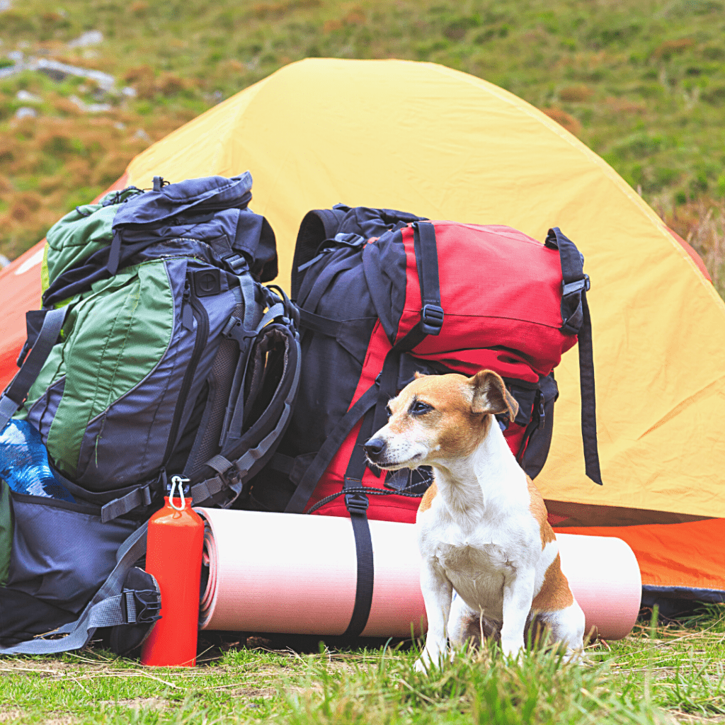 A dog is sitting outside of a camping tent.
