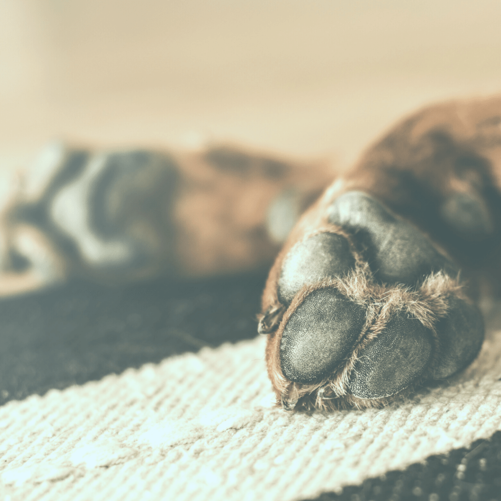 A dog is laying on the floor showing their paws.